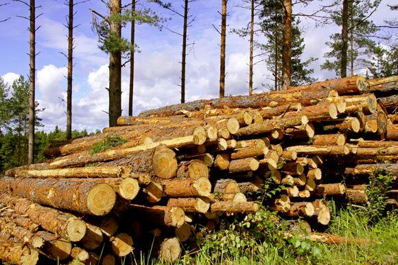 Metsänhoitoyhdistys Itä-Lappi Kemijärvi, Pelkosenniemi, Savukoski