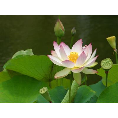 Open Lotus Wellness Center