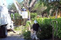 Any Town Tree - Professional Tree Trimming & Pruning Company in Naples, FL