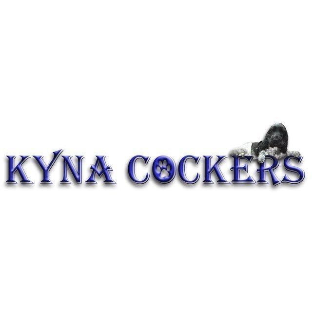 Kyna Cockers - St. Helens, Merseyside WA9 3LL - 07786 446062 | ShowMeLocal.com