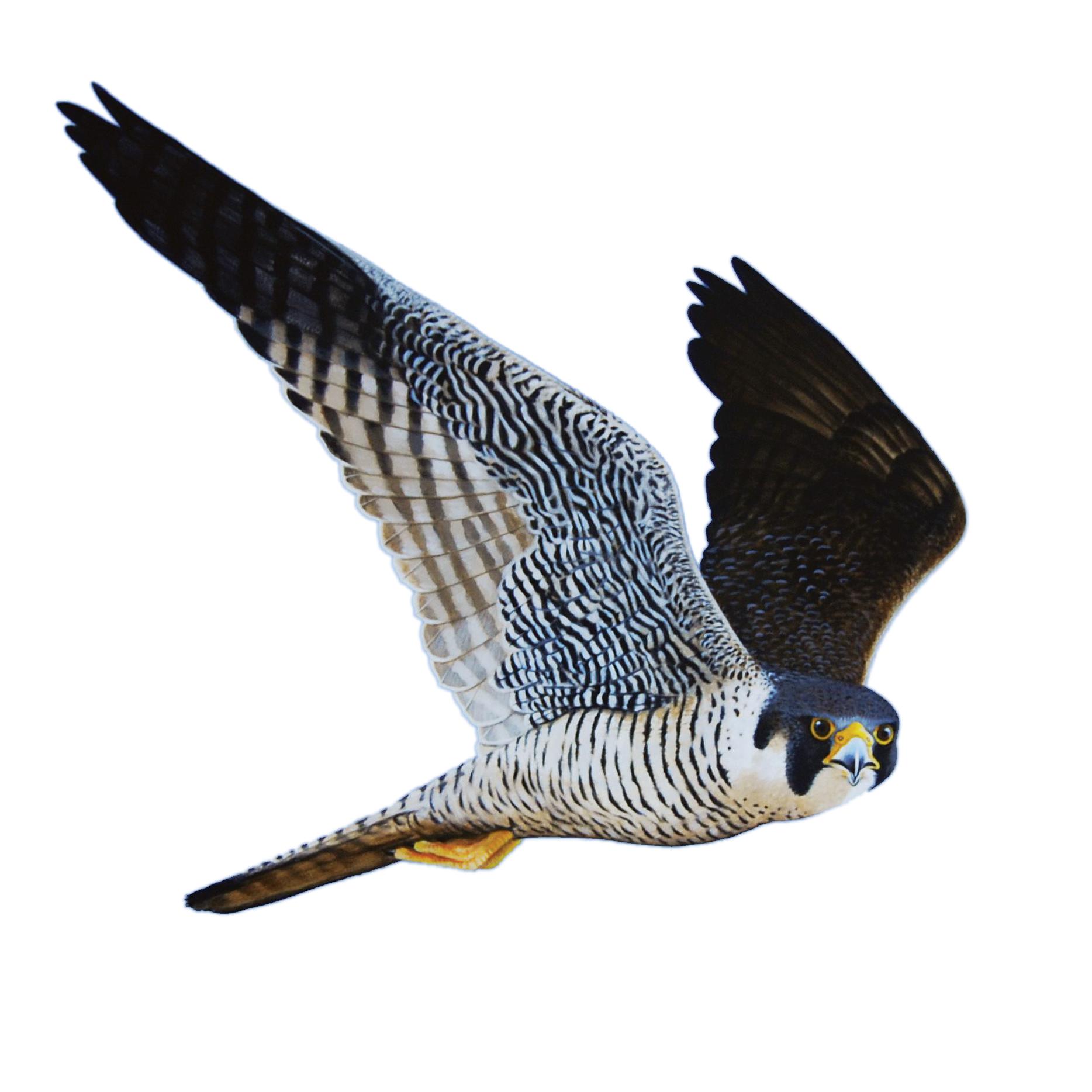 The Falcon - Banbury, Warwickshire OX17 1JJ - 01295 692120 | ShowMeLocal.com