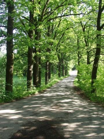 Lesy města Písku s.r.o.