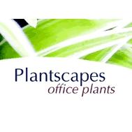 Plantscapes Office Plants