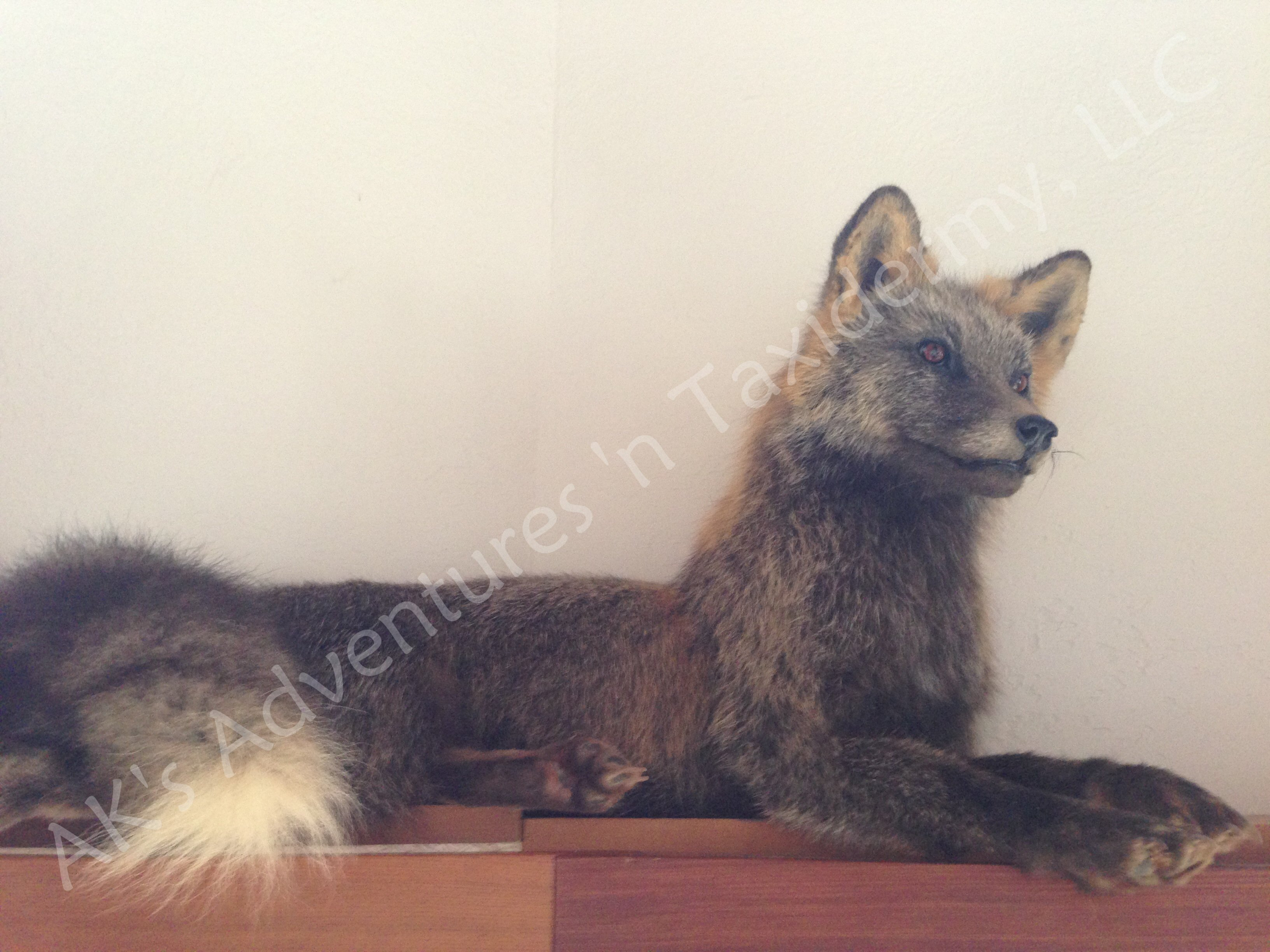 Life size cross fox
