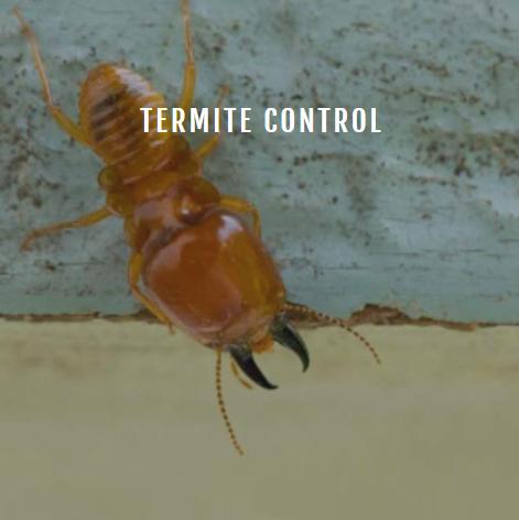 Ambush Pest Control, Inc.