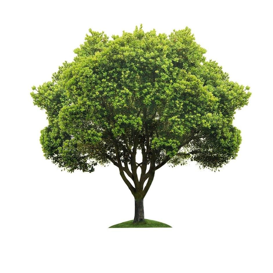 Bob Harris Tree Care - Novato, CA - Tree Services