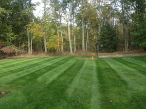 Image 8 | Green Zebra Landscaping
