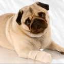 Maika'i Veterinary Clinic - ad image