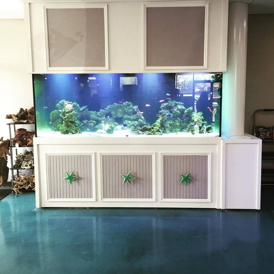 Southern Aquatics Local Fish Store Roswell Georgia