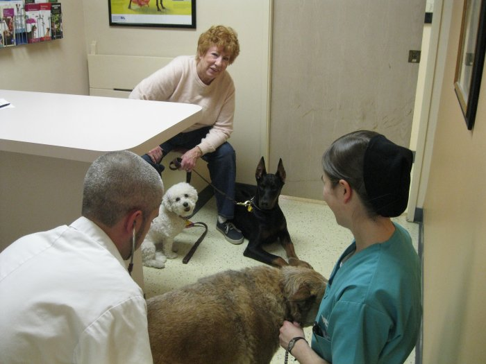 VCA El Mirage Animal Hospital Coupons near me in Surprise ...