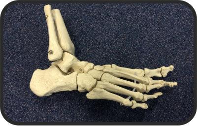 Deunk Praktijk voor Osteopathie A E