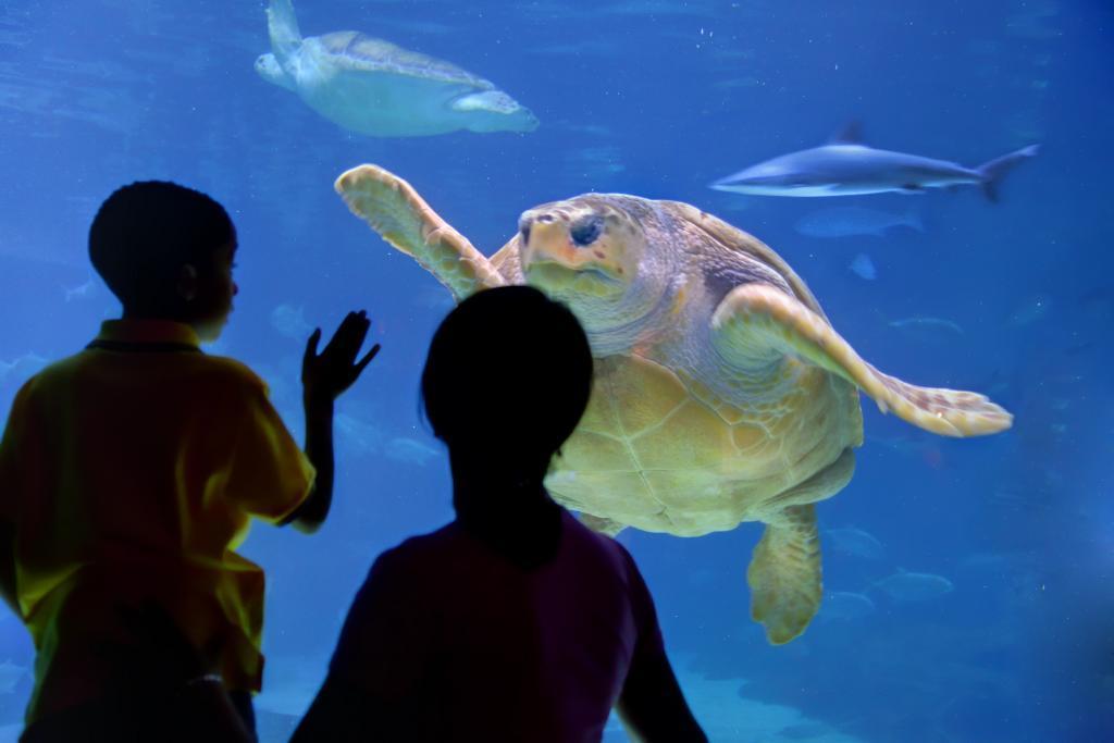 Adventure Aquarium In Camden Nj Whitepages