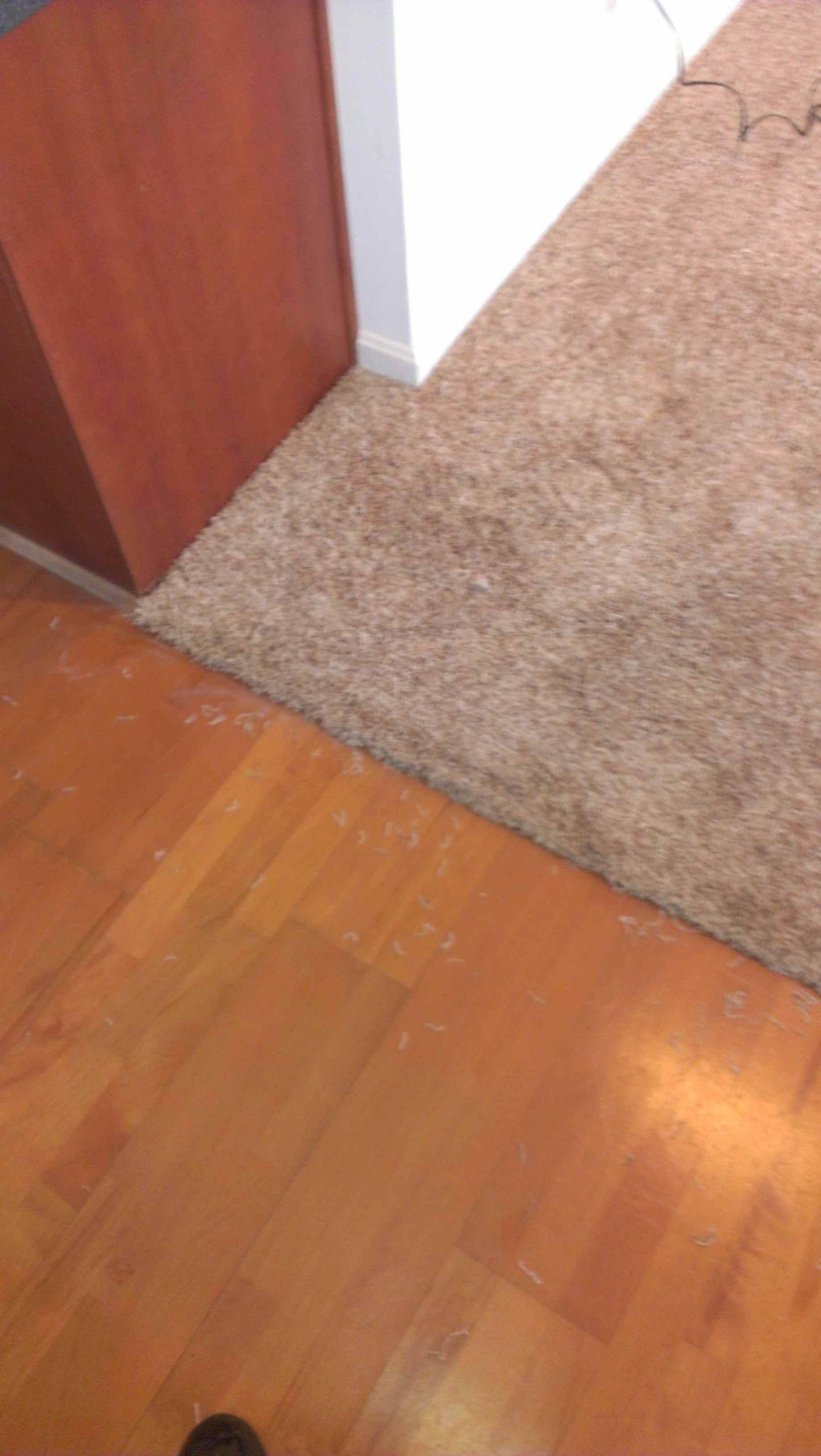 Image Result For Home Depot Carpet Cleaning Services