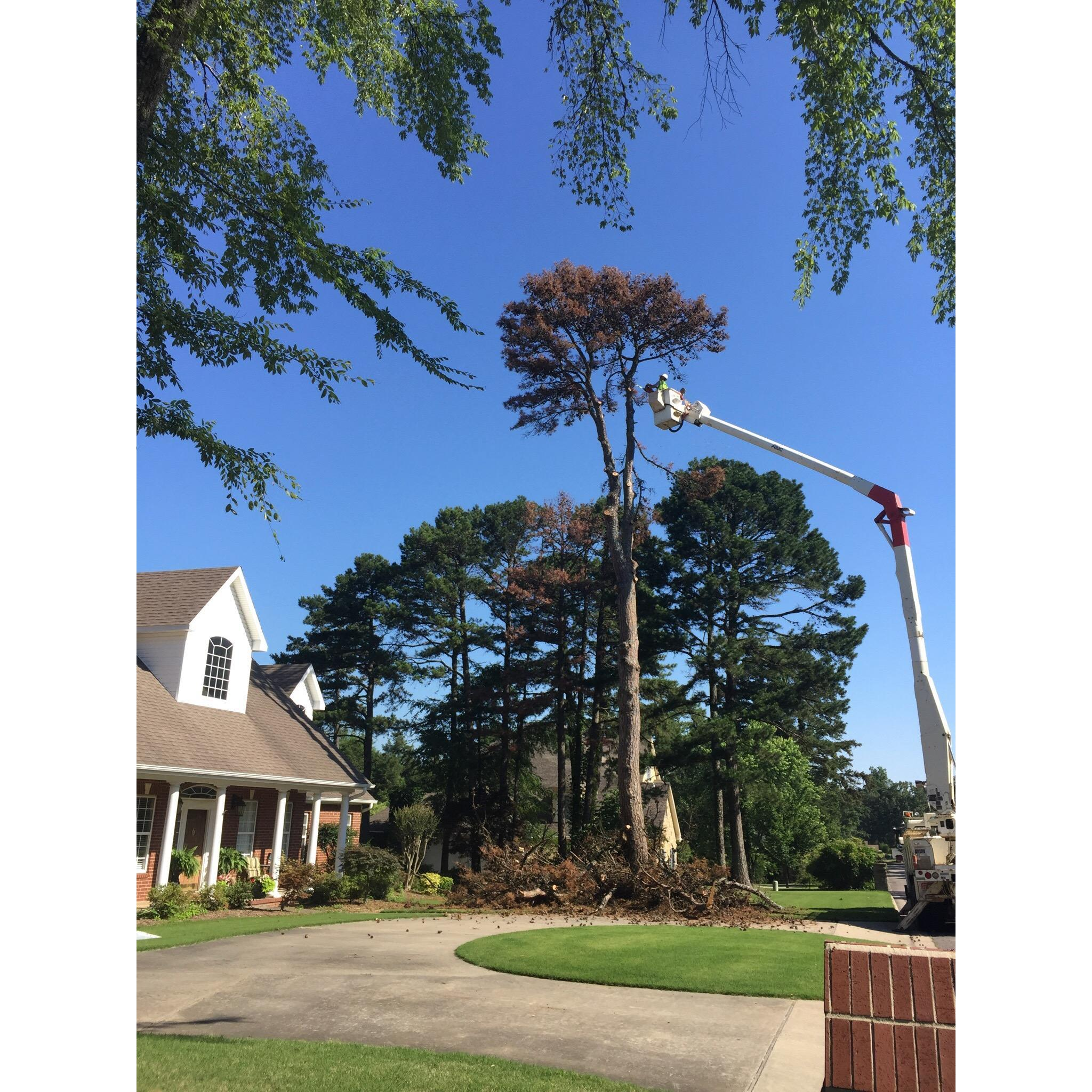 Dunlap Tree & Land Services