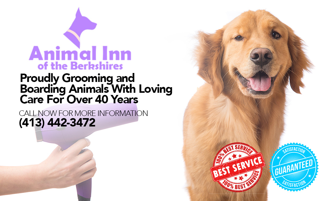 For Dog Training Pittsfield Ma