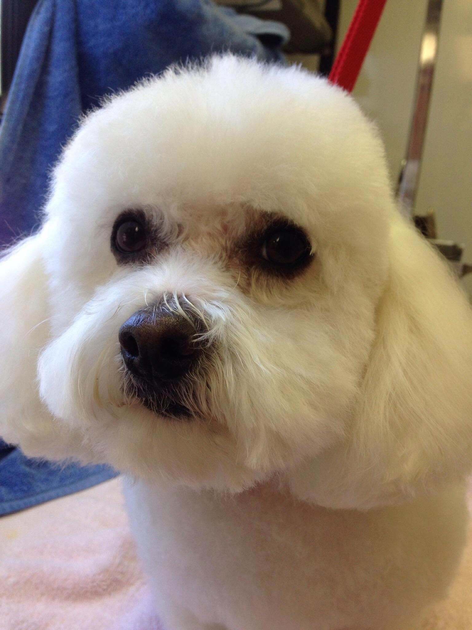 Valentine Mobile Dog Grooming