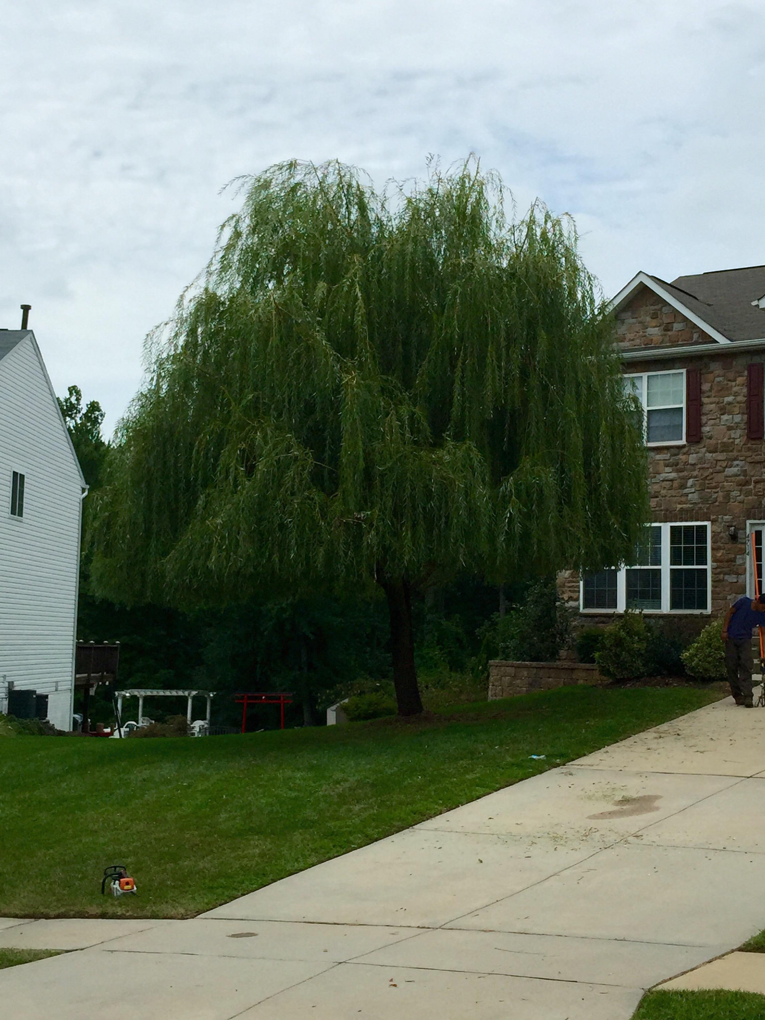 Express Tree Service Baltimore Maryland Md