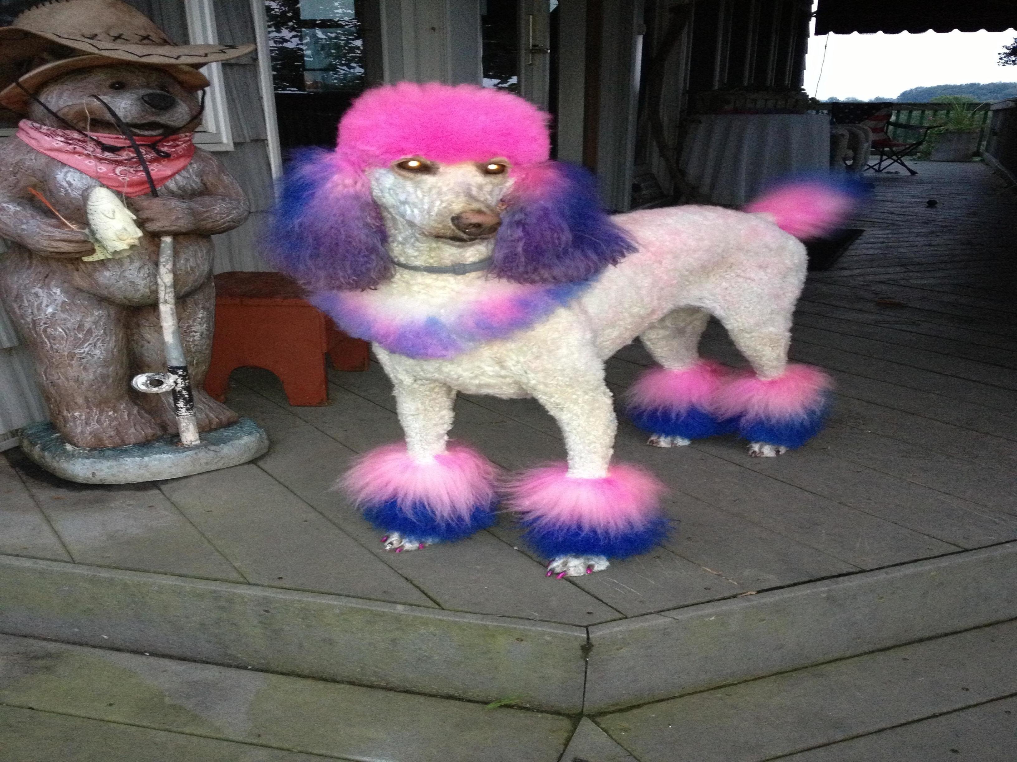 Janet Wilson Cfmg. Certified master cat groomer
