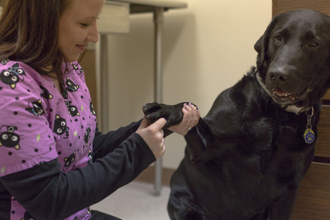 White Oak Veterinary Clinic