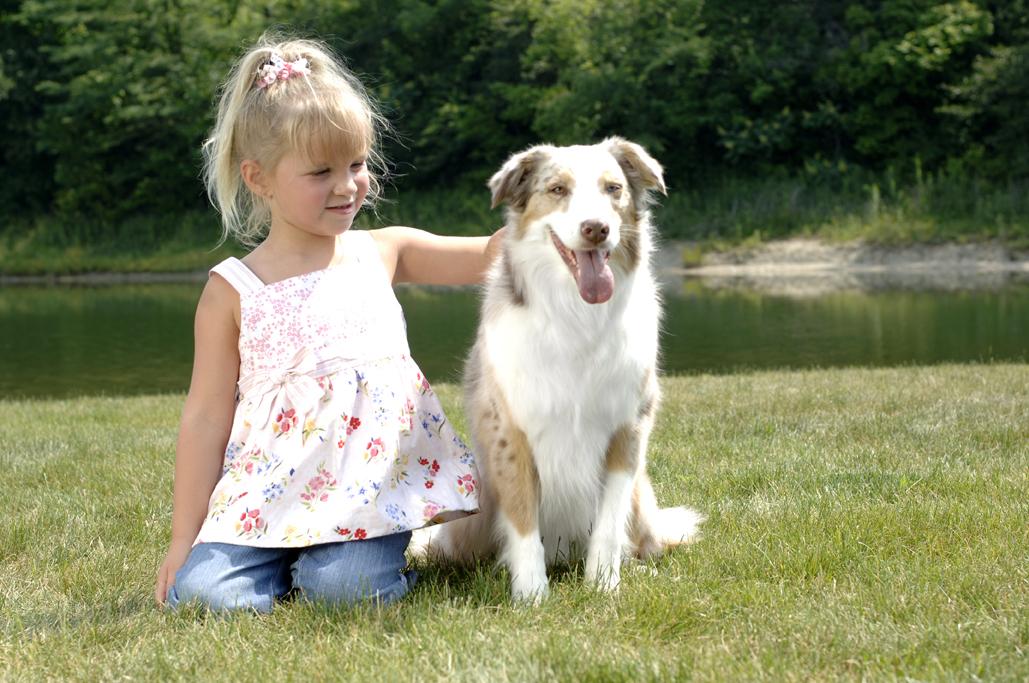Doggie-Do-Rite Hidden Pet Fences image 0