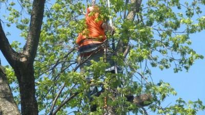 Tree Guys Tree Service - ad image