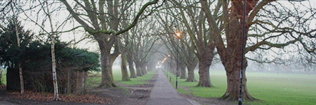 Gardenworks Tree Surgery Ltd Cambridge 01223 811423
