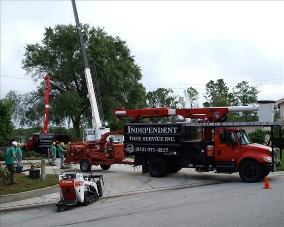Independent Tree Service Inc image 0