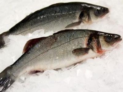 Daly's Seafood Ltd 2