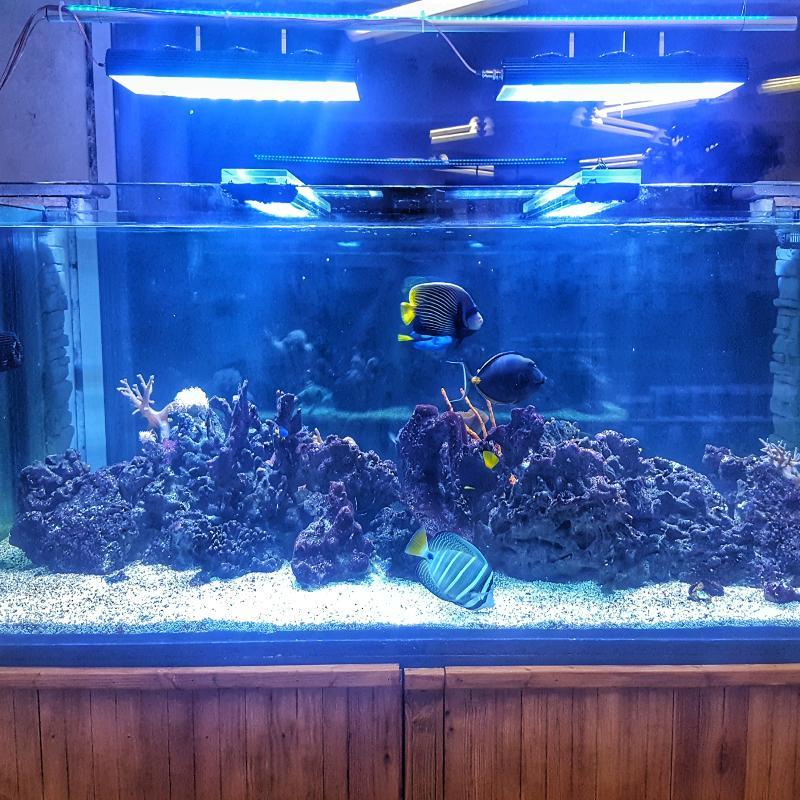 Corals & Fish
