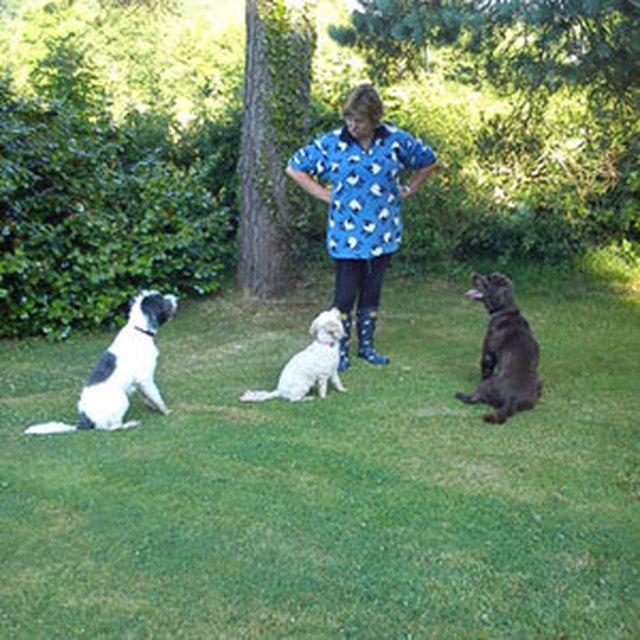 Dog Kennels In Ballymena Area