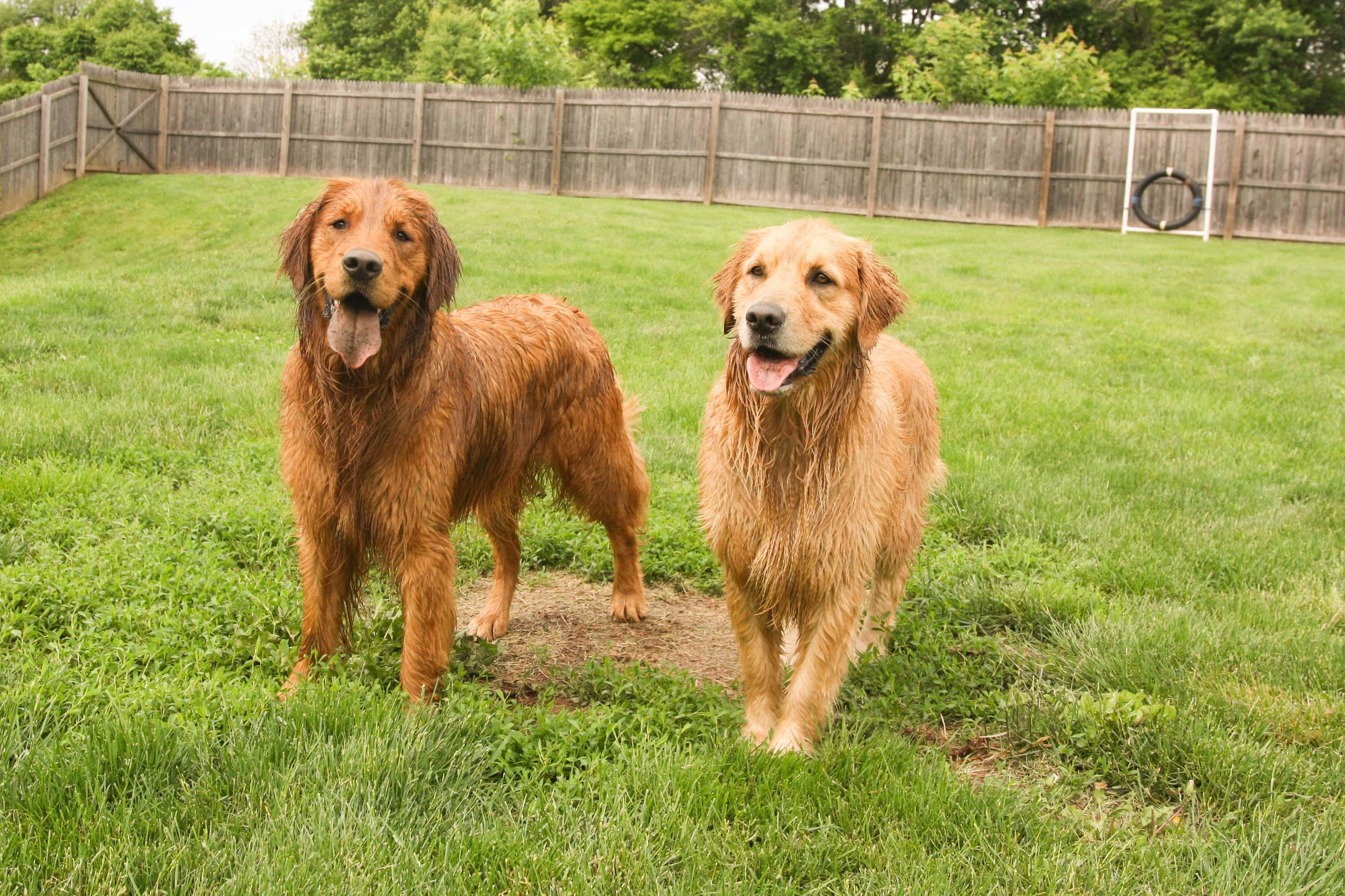 Skippack Dog Day Care