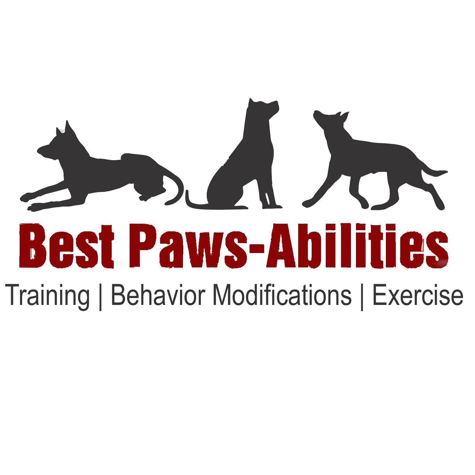 Service Dog Training Trenton