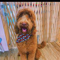 Woof Gang Bakery & Grooming  is a locally owned family operated business in  US States, Capitals, and Government Links Florida. We are a one-stop pet store offering a personalized customer experience to every visitor that walks through our door.