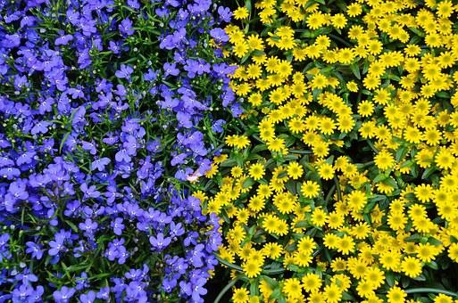 Lamprecht Blumenhaus