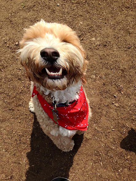 Happy Dog Day Care Natick