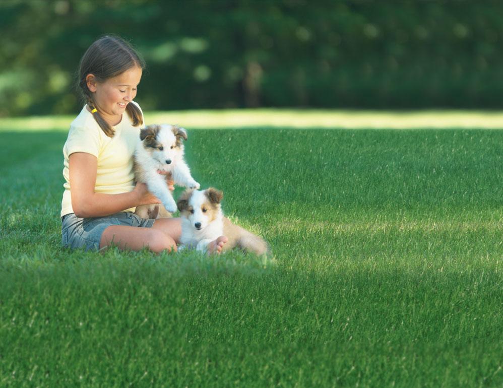 Total Pet Control image 2