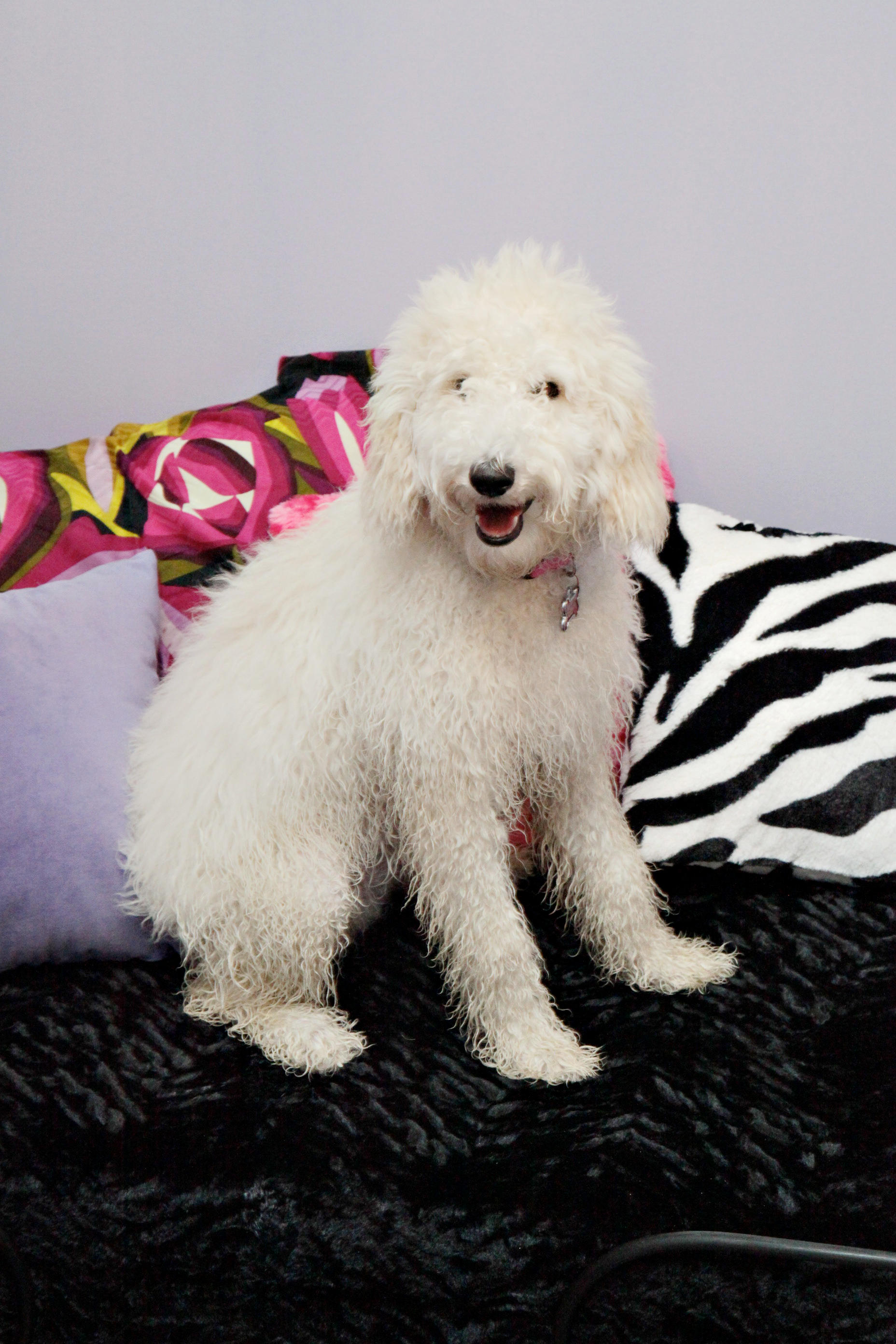 A Day In Paradise Dog Grooming Reviews