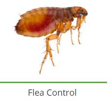 Pest Control Specialists (Welkom)