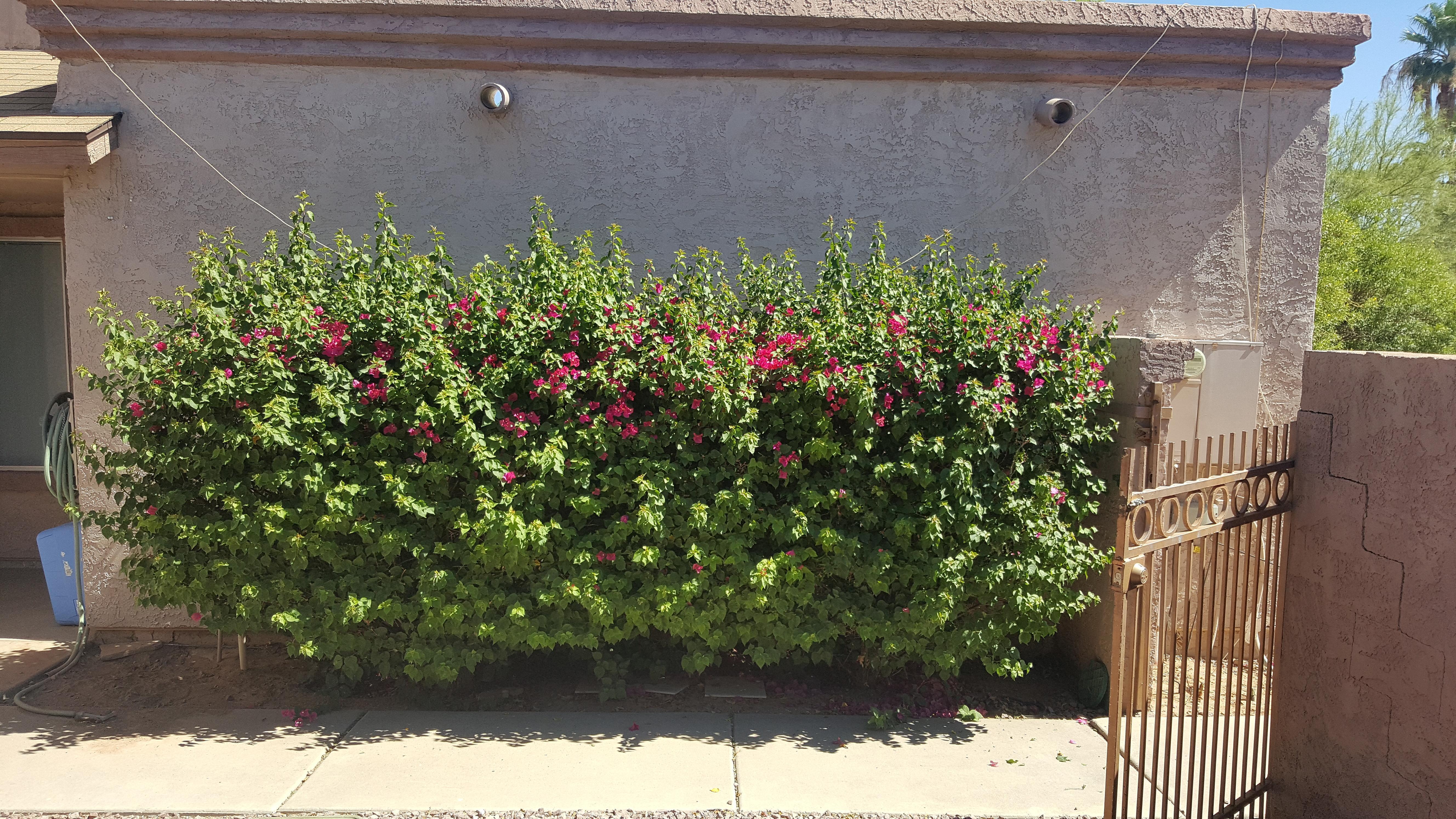 Right Choice Lawn Service In Maricopa AZ 85139 - ChamberofCommerce.com