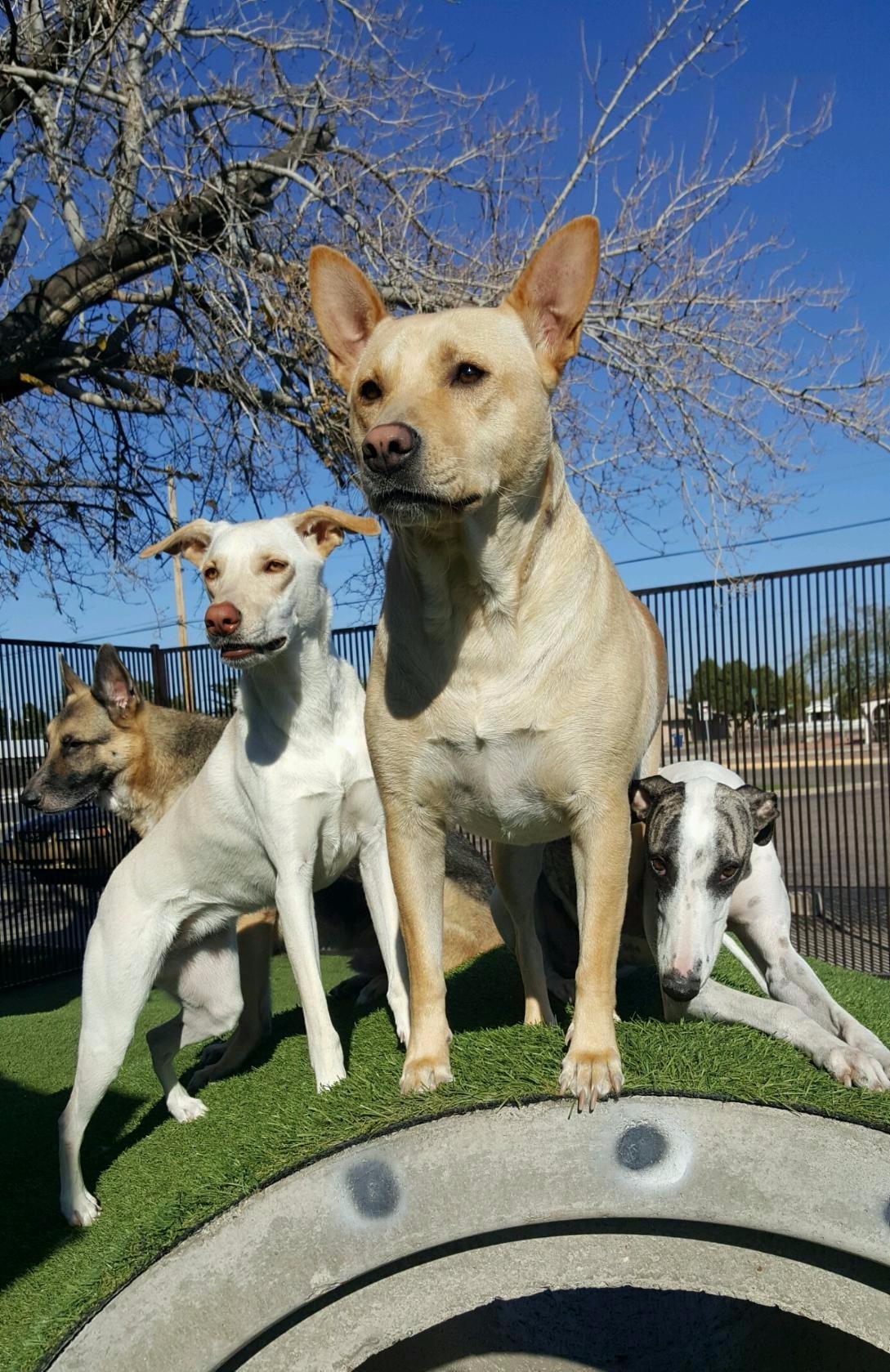 Lake Dog And Cat Veterinary Hospital