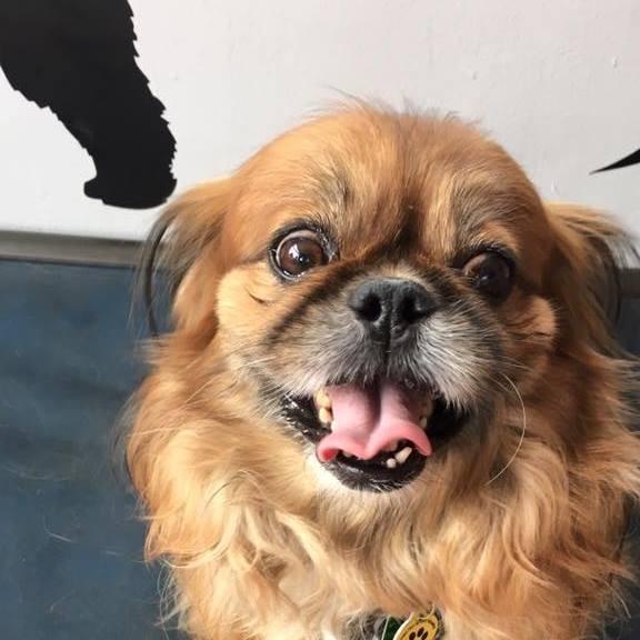 Best Dog Daycare Louisville Ky