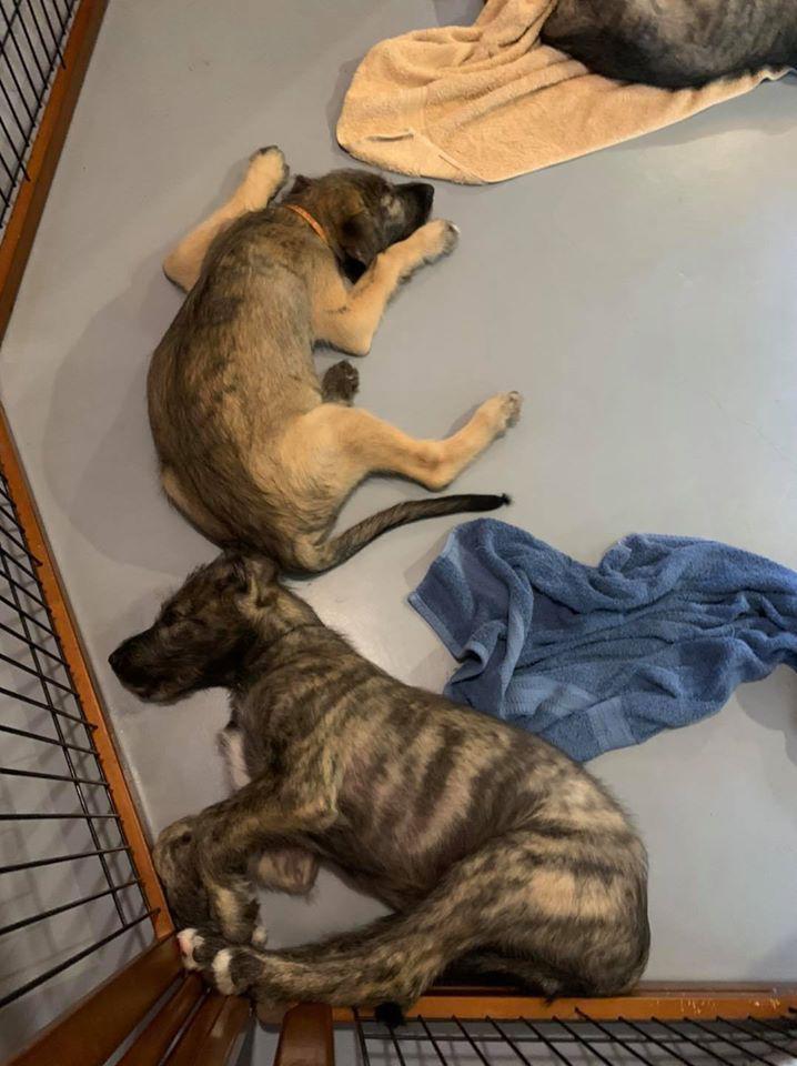 Total Pet Care & More LLC