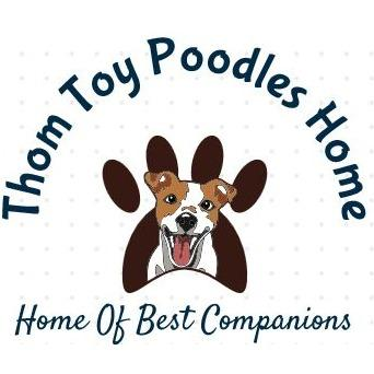 Thom Toy Poodles Home
