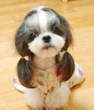 Best For Breeds Pet Grooming