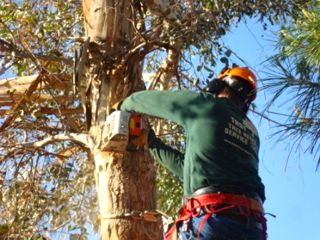 Tree Removal Service Tucson