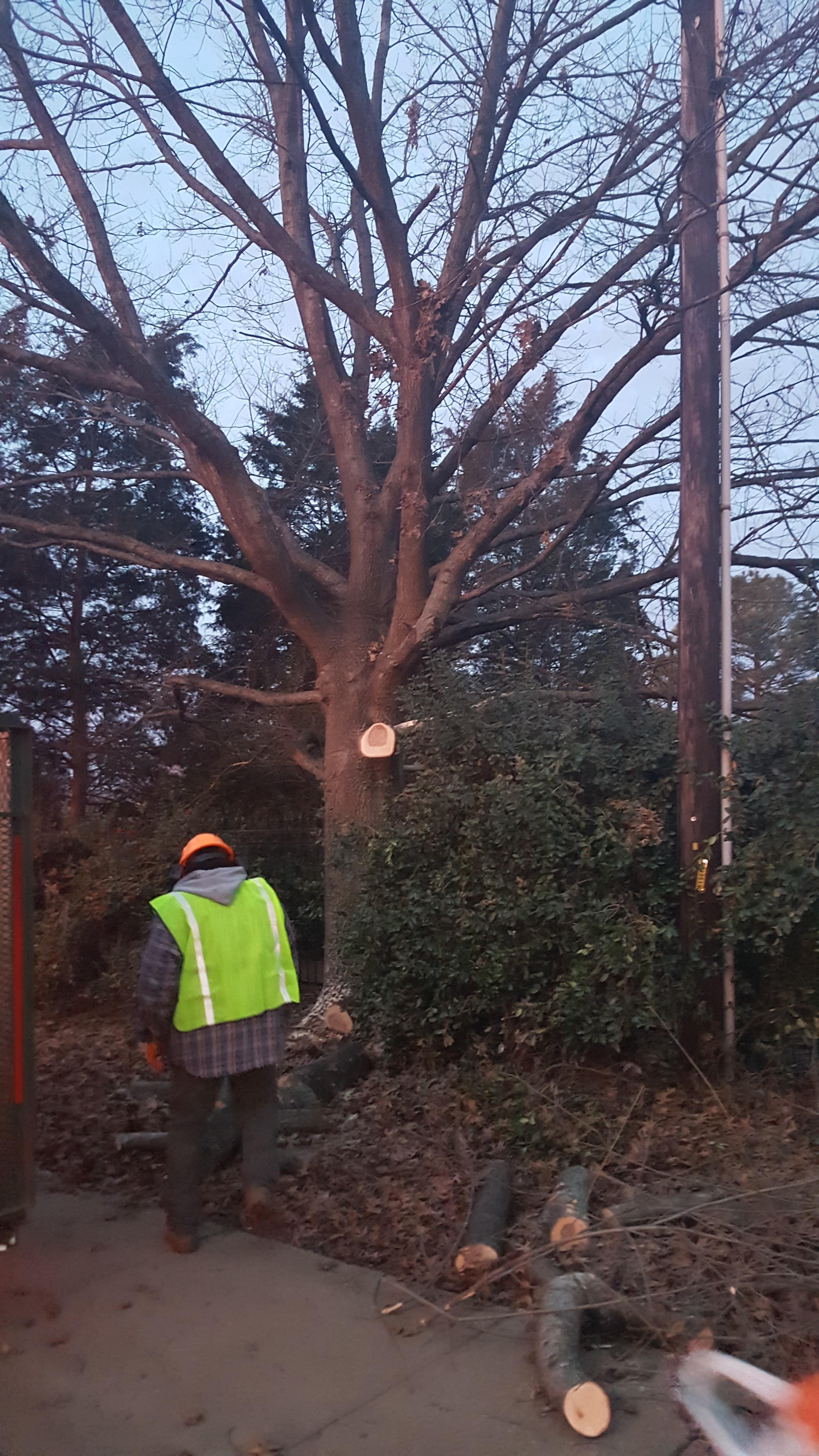 Alex's Tree Service