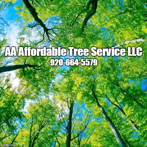 Aa Affordable Tree Service Llc