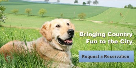 Meadowlake Pet Resort & Training Center - Houston, TX