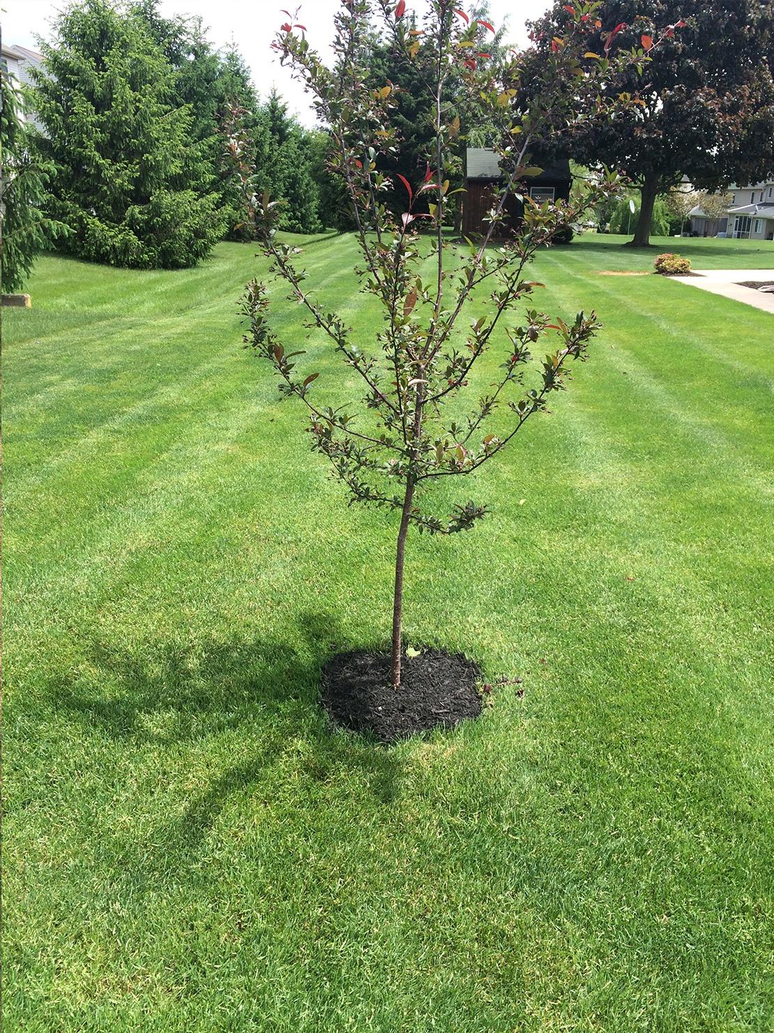 Timber Wolf Tree & Lawn LLC