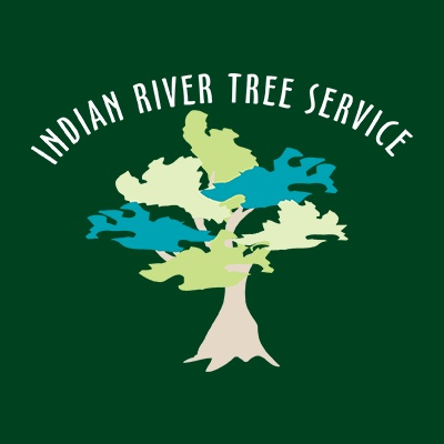 Indian River Tree